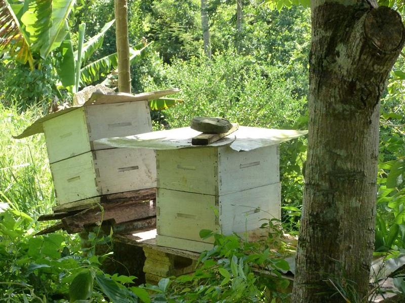 انتقال کلنیهای زنبورعسل