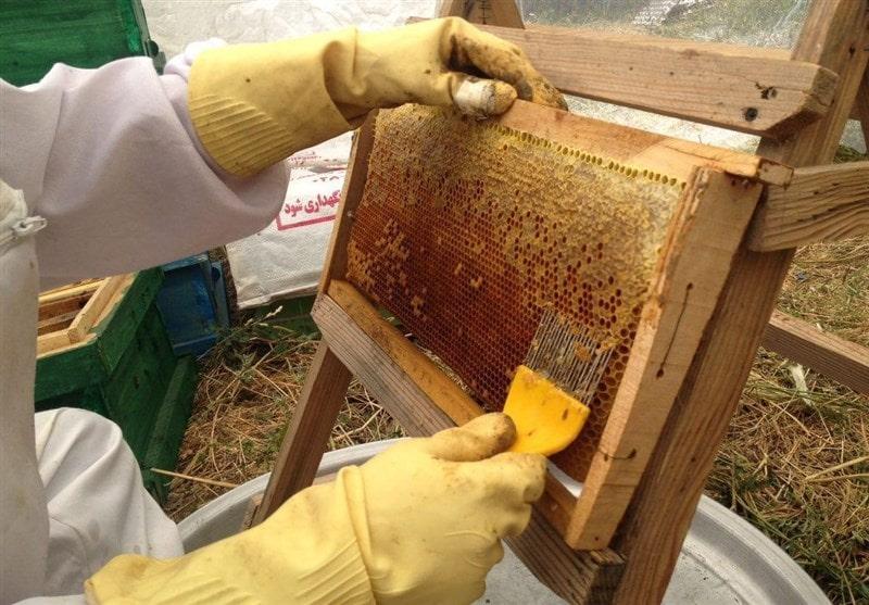 کارهای زنبورداردر پاییز (مهر ماه)
