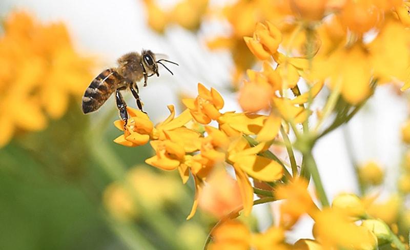 تغذیه زنبورعسل-2