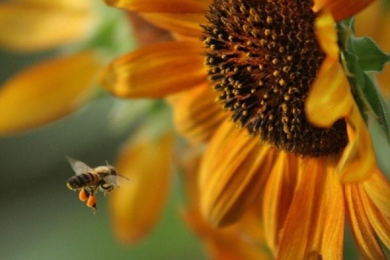 صفات متعالی زنبور عسل