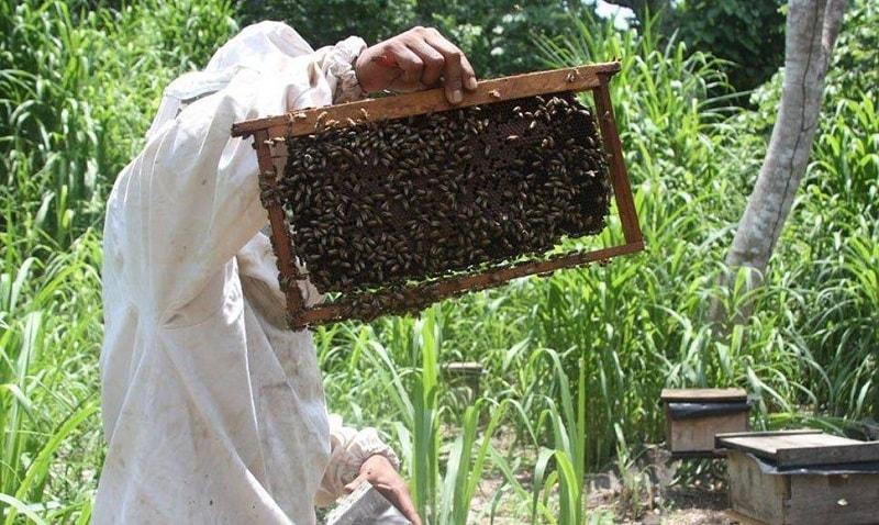 3- دفع مدفوع توسط زنبورهای عسل در زمستان