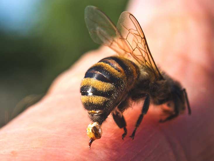 خصوصیات فیزیکی و شیمیایی زهر زنبورعسل