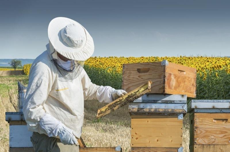 پرورش زنبور عسل