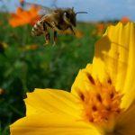 کارهای زنبوردار در اردیبهشت