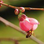 کارهای زنبوردار در فروردین