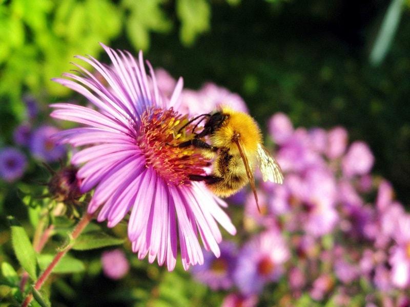پرواز زنبورها