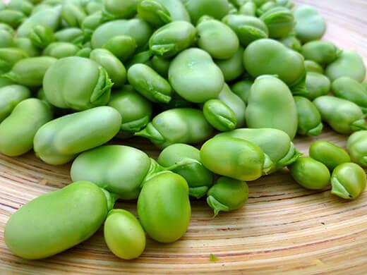 گیاه باقلا