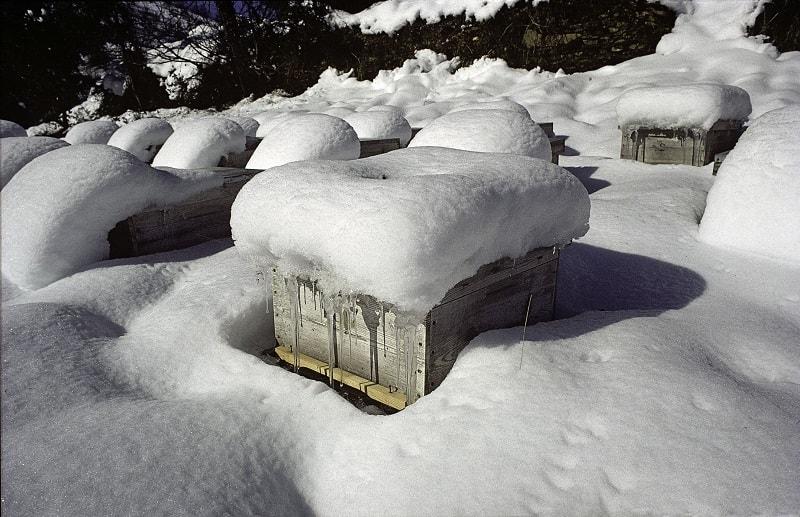 شرایط مناسب کندو برای زمستان گذرانی