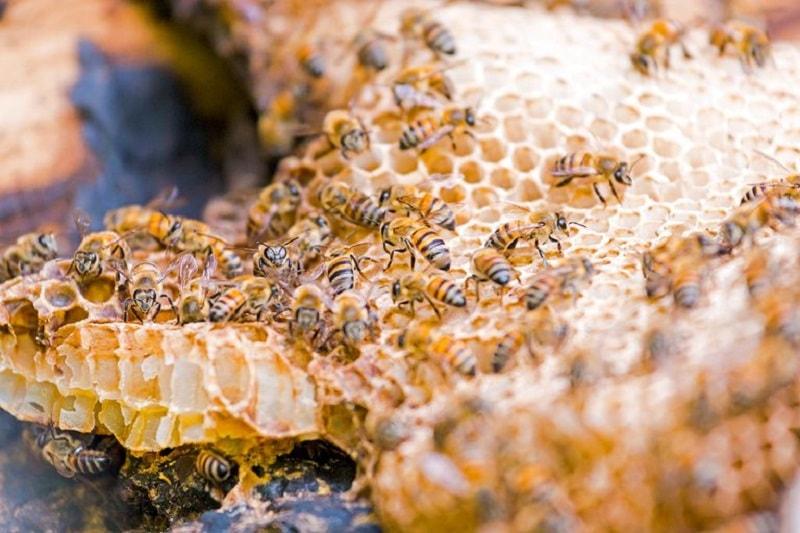 تغلیظ شهد رقیق و تبدیل آن به عسل رسیده