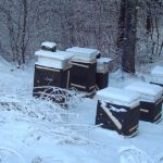 مراقبت ها و کارهای زنبوردار در زمستان