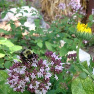 کارهای زنبوردار در خرداد