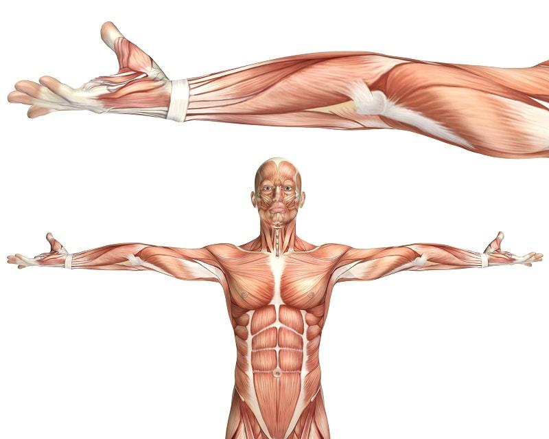 فسفر و کلسیم هر دو برای کار عضلات و در عکس العمل های طبیعی و نرمال اعصاب