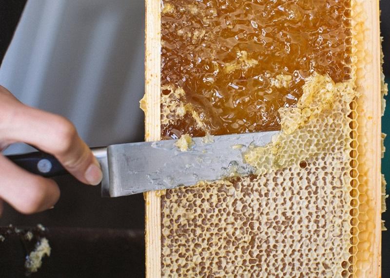 برداشت عسل در تابستان