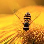 گرده افشانی زنبور