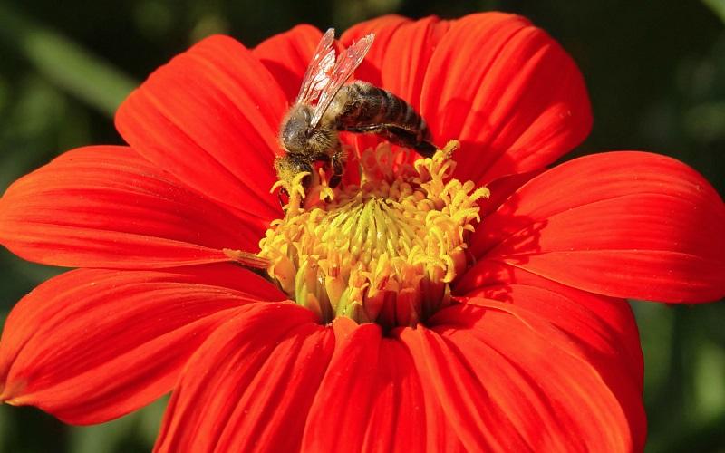 قدرت تشخیص رنگها توسط زنبور عسل