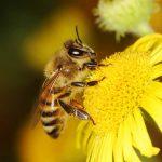 رشد زنبورعسل