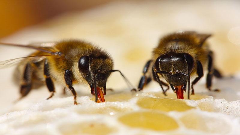 تغذيه بچه زنبور