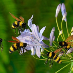 مدت زندگی زنبورها