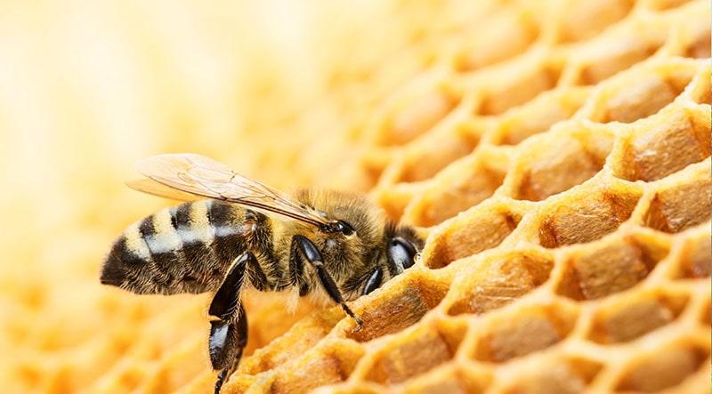 تبدیل شهد به عسل