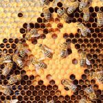 عسل طبیعی برای درمان بیماری ها