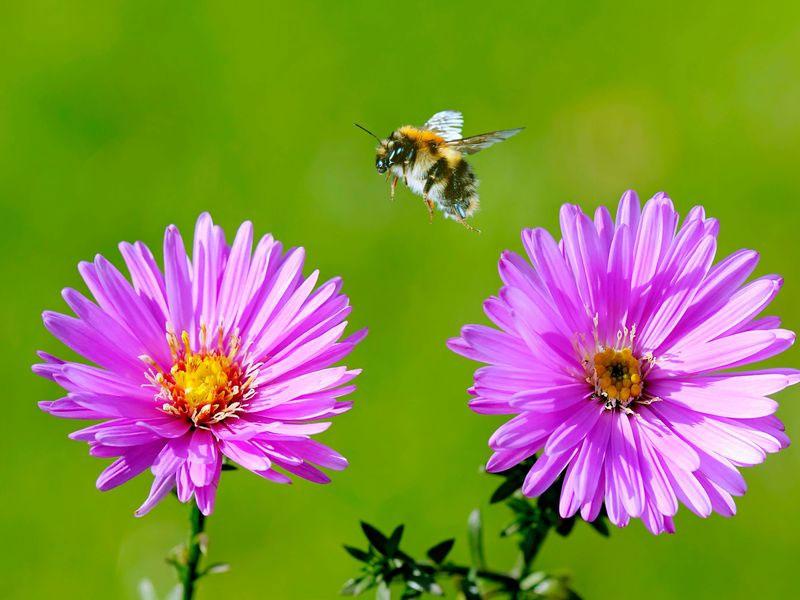 هوشمندی زنبوران عسل