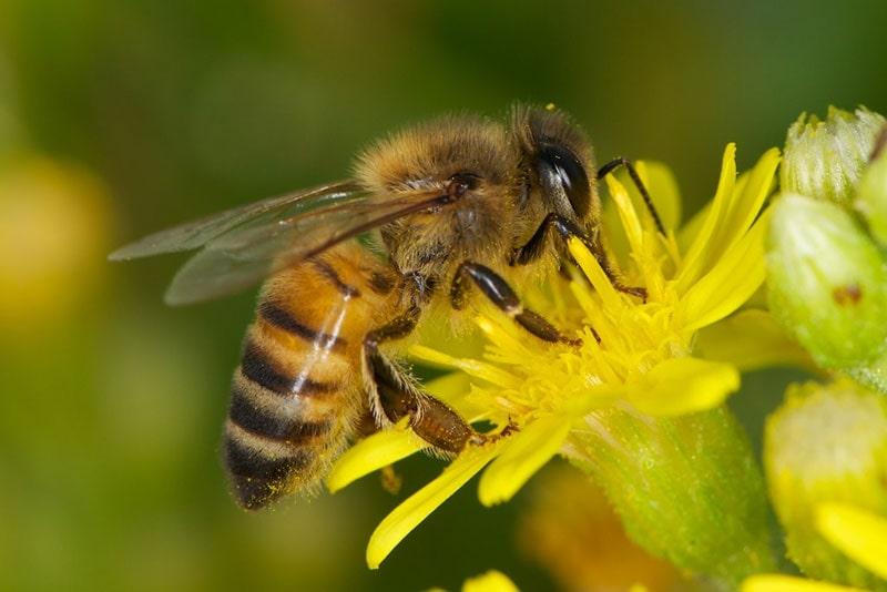 مفهوم لغوی عسل