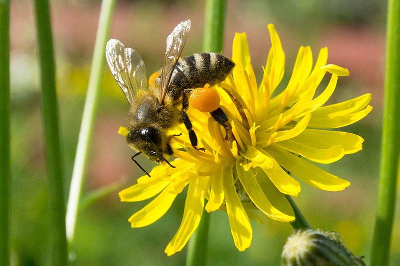 معرفی اندام گل عسل دهنده