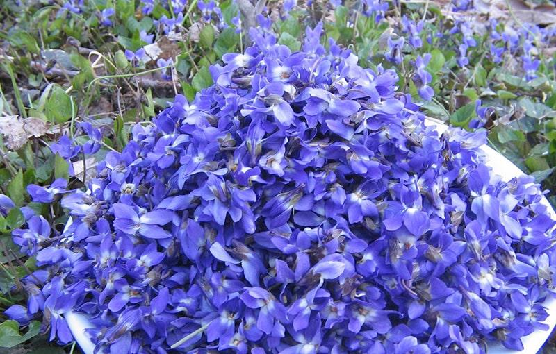 گل های عسل دهنده