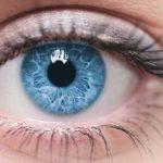 زالو درمانی در امراض چشم
