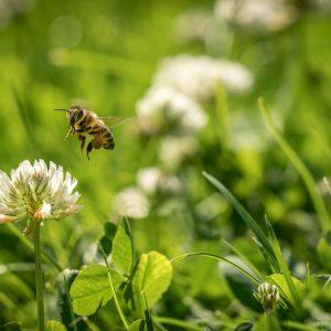 جهتیابی زنبورعسل