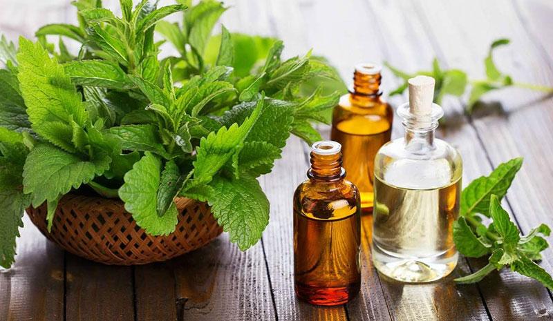 داروهای گیاهی برای روده تحریک پذیر