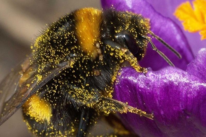 نحوه کار زنبور عسل