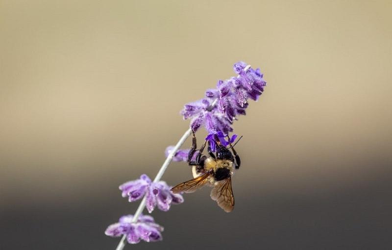 زنبورها به سراغ چه نوع گل هایی می روند