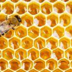 تغذیه زنبور عسل