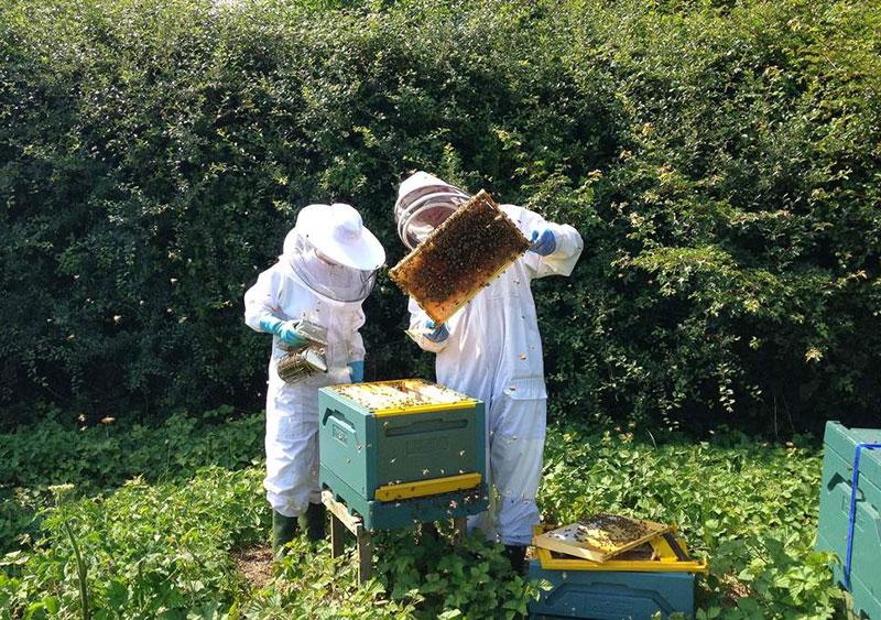 دانستنی های کندوی زنبور عسل