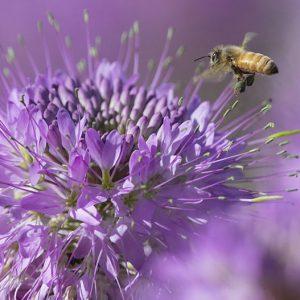 عجایب زنبور عسل