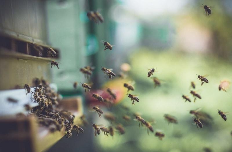 وظایف درون کندویی زنبوران کارگر