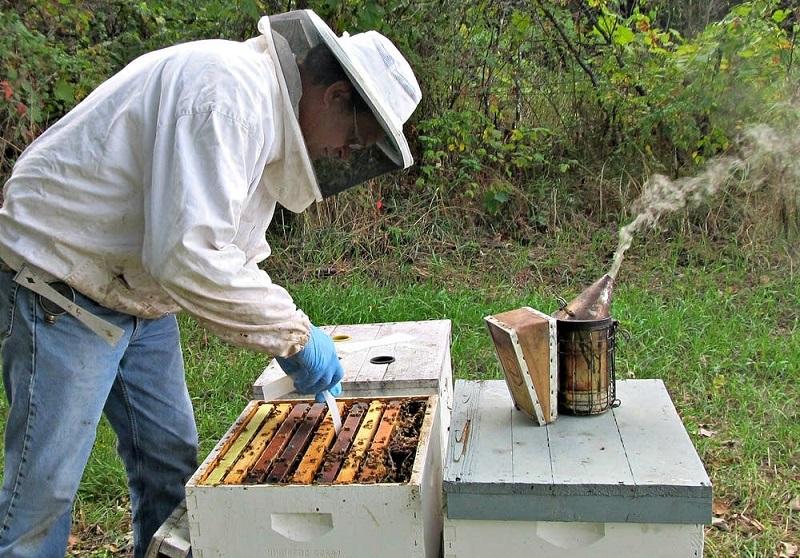 17- اهمیت داشتن داروخانه توسط زنبوردار
