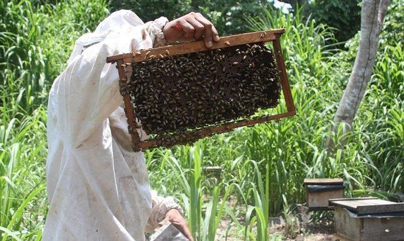 در پرورش زنبور عسلبا کلنی های ضعیف چه باید بکنیم؟