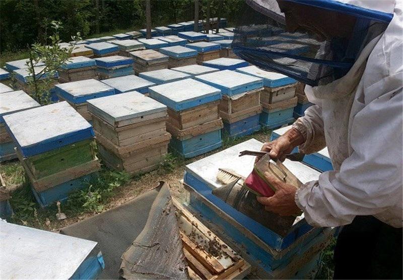 نکات مهم مدیریتیدر پرورش زنبور عسل در فصول مختلف سال