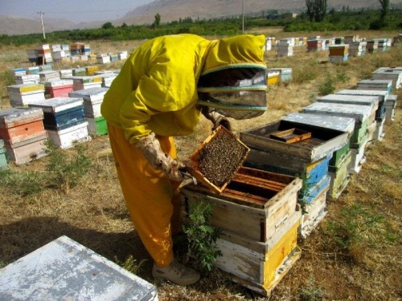 زنبورداری پیشرفته در ایران
