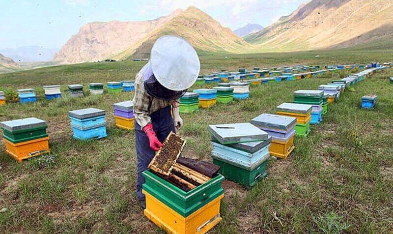 شغل زنبورداری-3