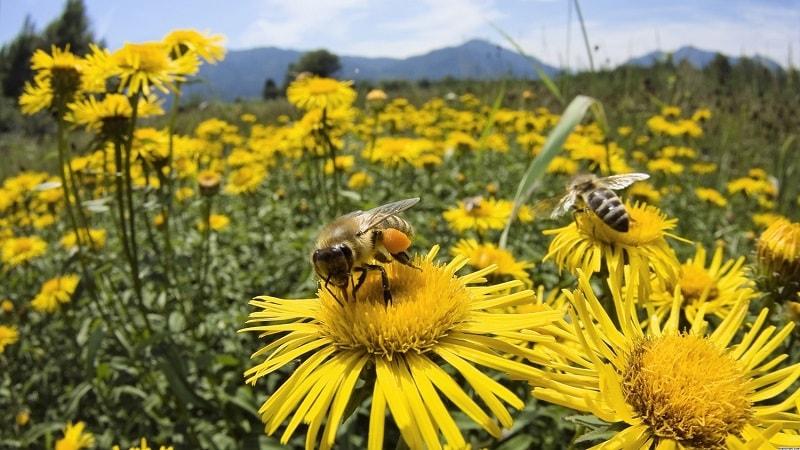 وضع امروزی زنبورداری در جهان