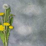 گل قاصد