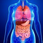 تشریح و فیزیولوژی بدن انسان