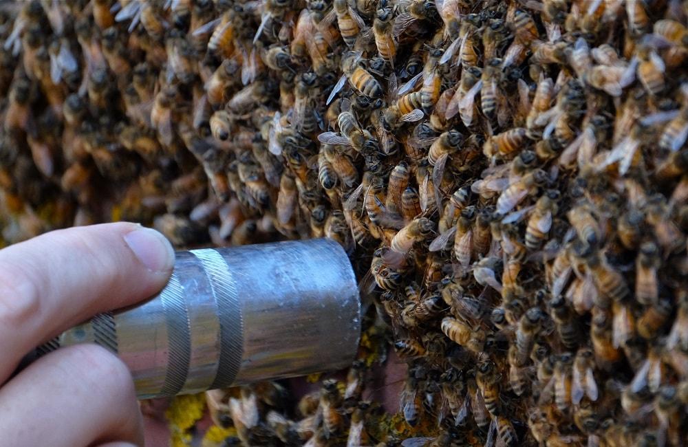 کارهای زنبوردار در شهریور