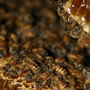 استاندارد عسل در ایران