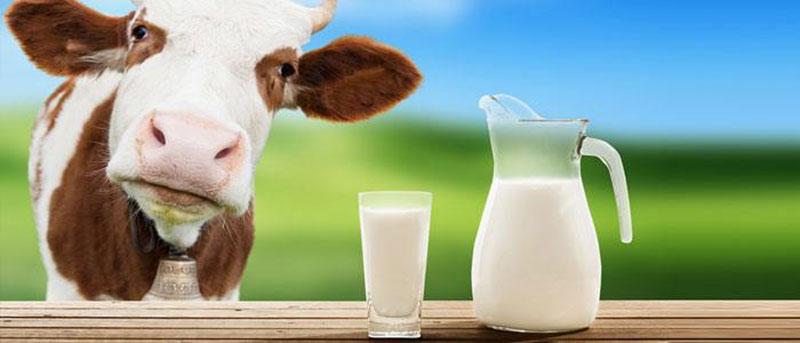 گوشت و شیر
