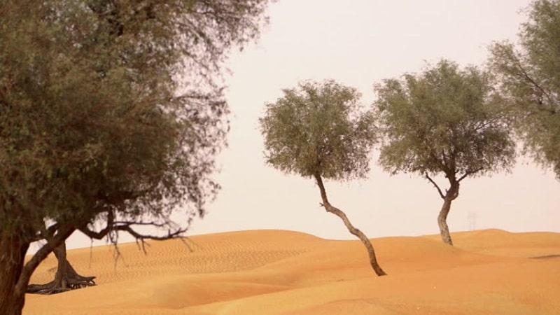 مزاج شناسی گرم و خشک
