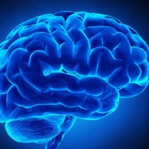 ساختمان مغز